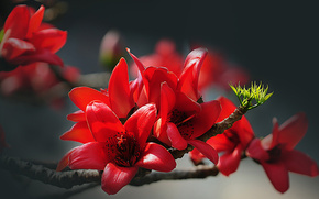 Flores, ramita, ternura