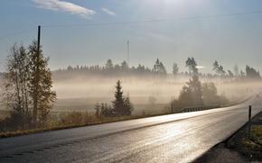 дорога,  туман,  утро
