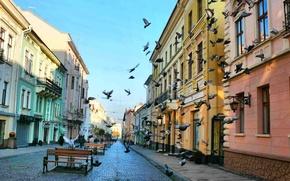 улица,  голуби,  прилавок