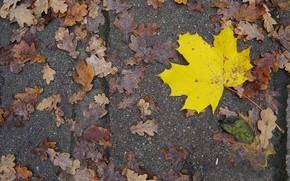 осень, лист, желтый