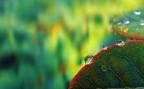gotculas, Orvalho, em folhas