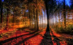 juego, luz, y las sombras
