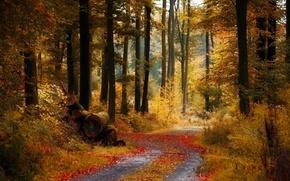 Herbst, Wald, Strae, Bume, verlsst