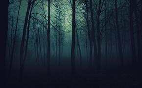 лес,  деревья,  темнота,  вечер