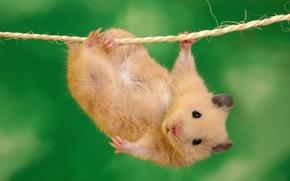 動物, ロープ, 視線