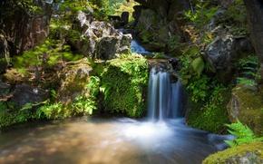 cascata, Rocks, pietre, alberi, fogliame, acqua