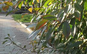 осень, город, ветки, вишня, неувядающая