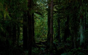 forest, thicket, Trees, moss