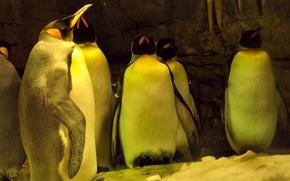 pinguino, Penguins, neve, ghiaccio