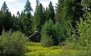 дом,  в,  лесу,  поляна