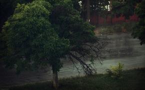 性质, 天气, 树