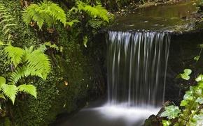 creek, forest, grass, water