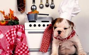 cane, cucina, cucinare