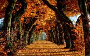 秋, 木, 葉