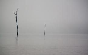 lila, niebla, encima, nosotros, carrozas