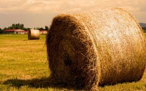 солома, тюк, сено, поле