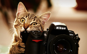 cat, Kote, photo, nikon
