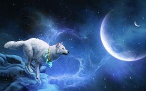 costellazione, Beagles, Cani