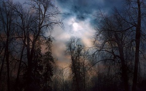 notte, foresta, chiaro di luna