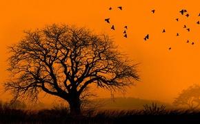solitaire, arbre, nue d'oiseaux