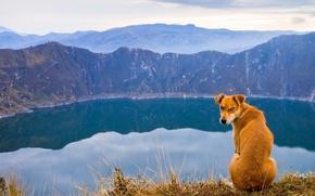 Пёс,  озеро,  природа