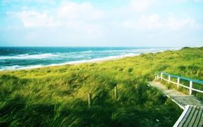 зелень, дорога, путь, море, волны