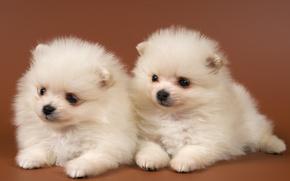 Cuccioli, cuties, Bianco