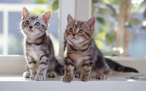 Котята,  на,  подоконнике