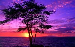 Hawai, rbol, puesta del sol