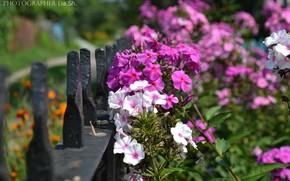 花卉, 性质, 颜色, 亮度