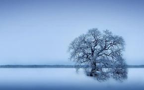 hiver, champ, arbre solitaire