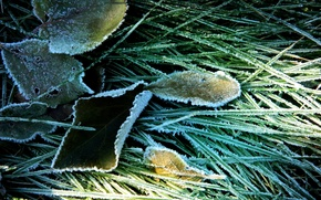 leaves, frost, grass