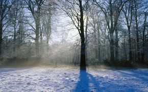 зима, снег, деревья, свет