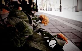 rua, buqu, Flores
