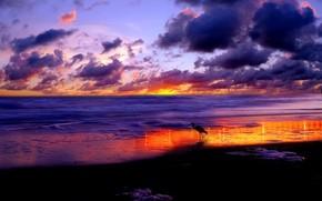 sunset, clouds, Sea, stork