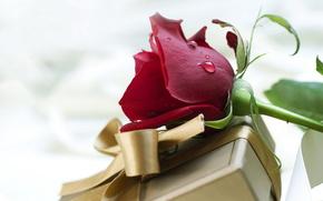 праздник,  день святого валентина,  день всех влюбленных,  любовь,  чувства,  цветок,  роза,  красная,  подарок,  коробка,  упаковка,  бантик,  лента,  атлас,  шелк,  золотой,  бронзовый,  цвет,  капли