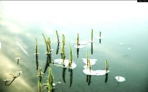 настроение, одиночество, вода, пруд, лилии