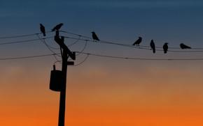 wire, column, Birds
