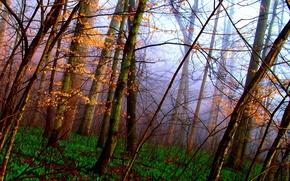 Naked, autumn forest, green carpet