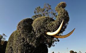 elephant, tusks, sculpture, grass