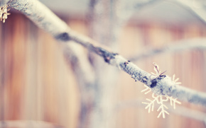 Branch, Snowflake, Gently, Beautifully