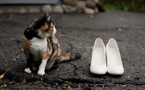 Cat, Shoes, asphalt