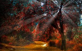 性质, 秋天, 道路, 树, 光