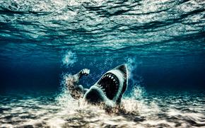 акула,  качок,  мутант,  вода