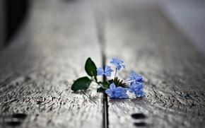 макро,  фото,  цветок,  листья,  лепестки,  растение