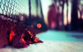 Ограда,  снег,  листья осени