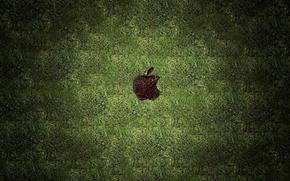 газон,  трава,  след