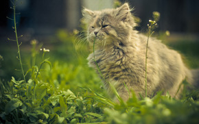 cat, grass, summer, serenity, vista