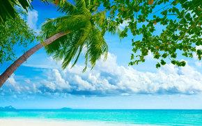 paradise, palm, ocean
