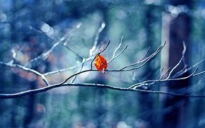 зима,  макро,  листик,  природа,  боке
